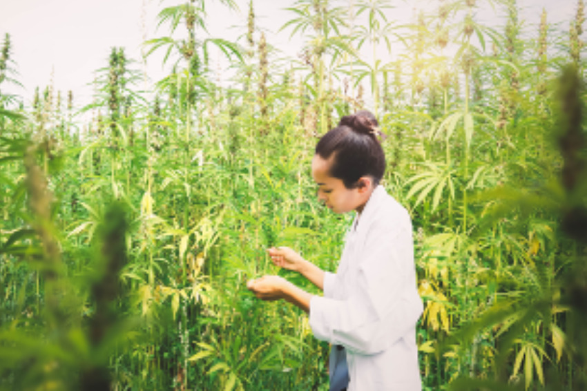 【環境問題へ貢献】麻植物とCO2の関係。カーボンニュートラルとは