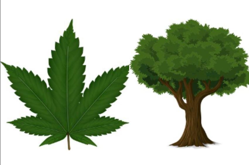 【地球の資源の救世主⁈】麻の他の資源との比較