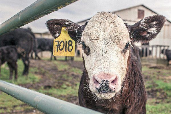 【地球環境にも寄与する植物性ミルク】ヘンプミルク