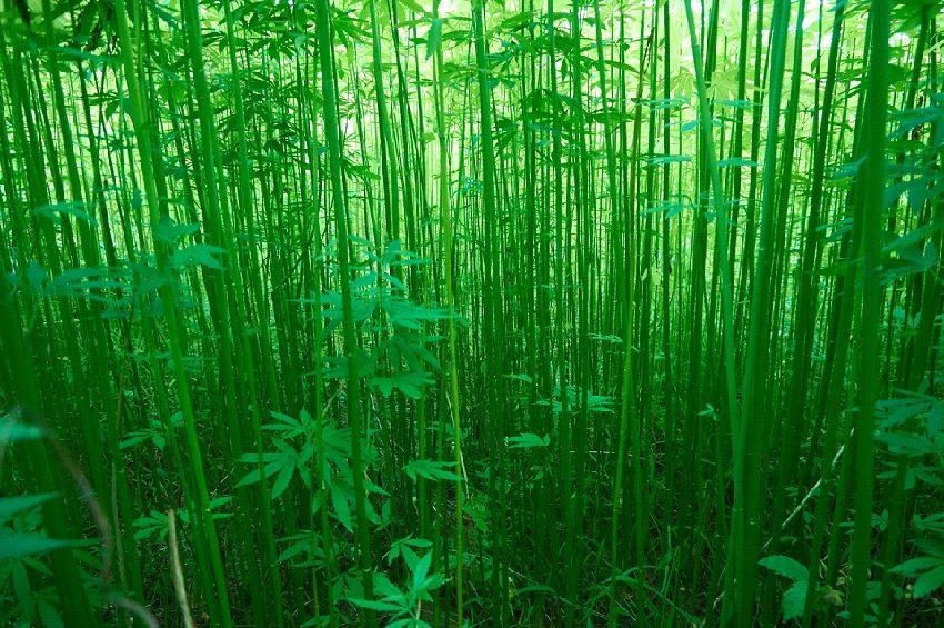 【上布】近江の風土と琵琶湖の水が育てた近江上布
