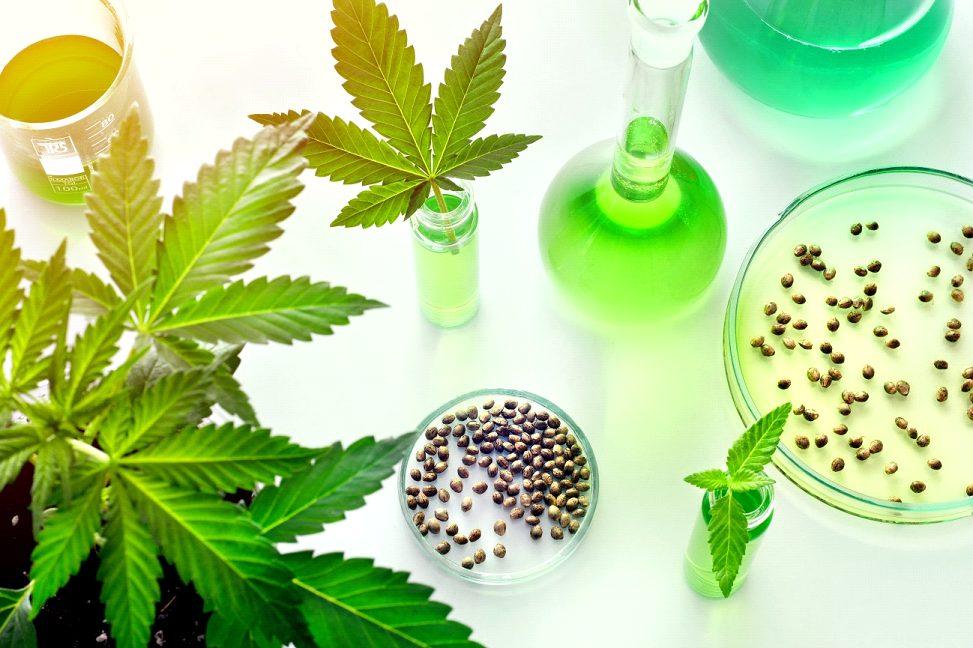 【アジア初】医療大麻合法化をめぐるタイの動き