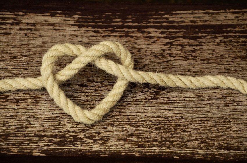 【新時代の自然由来の繊維】繊維としての麻植物